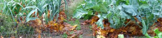 Organic Gardening on the West Coast