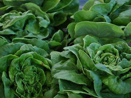 Space Constraints? Try Edible Landscaping
